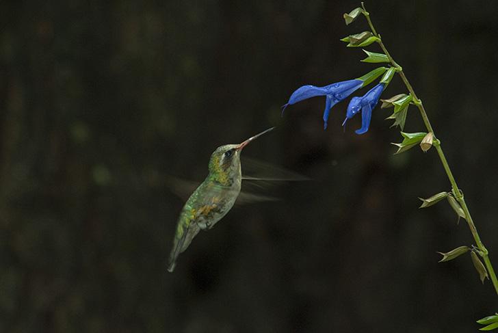 un oiseau vert très rapide
